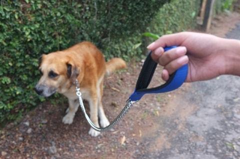 Forstoppelse hund