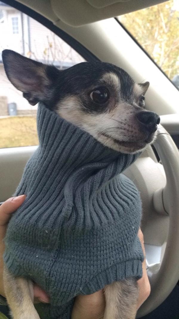 Odi Dog Of Pet Parent Kennedy Pawshake