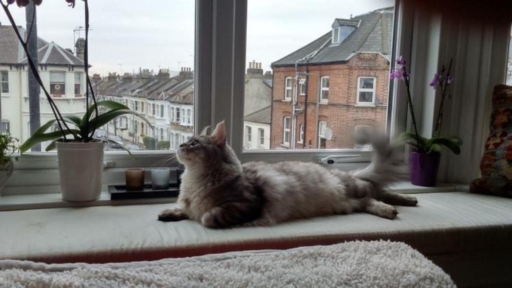 Tessa in London back image