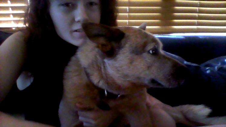 Dog And Cat Sitting Perth
