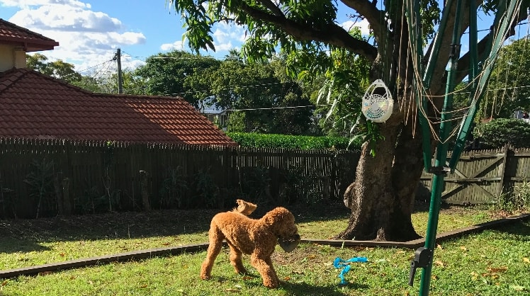 Katelyn in Brisbane back image