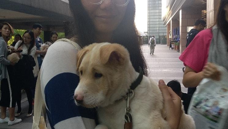 Amber in Hong kong back image