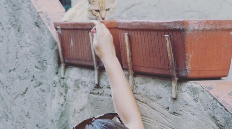 Amber in Krimpen aan den ijssel back image