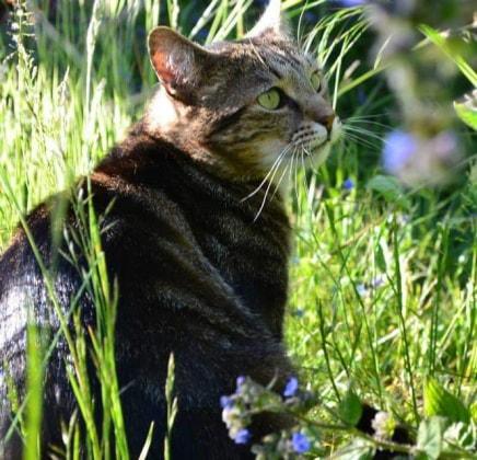 Frances in Aldershot back image
