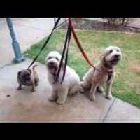 Baxter, Milly, Bella, Bella