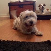 Baxter, Hunter, Jess