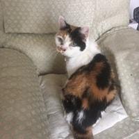 Purdy Puss Cat