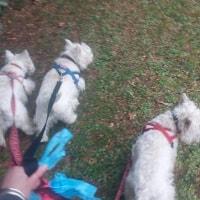 Minty, Angus, Shirley